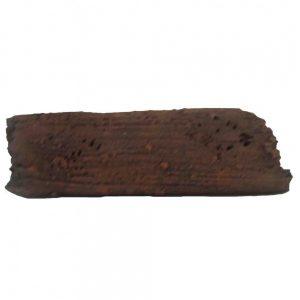 Bristlenose Log