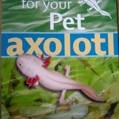 Caring For Your Pet Axolotl