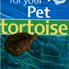Caring For Your Pet Turtle