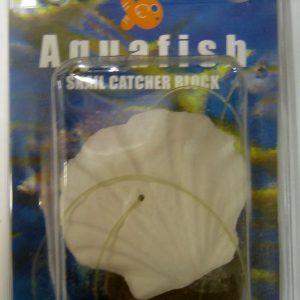 Snail-Catcher-Clam-Shell aquafish australia
